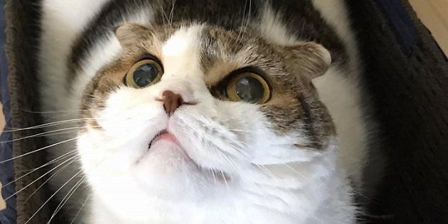Newsbild zu Masahiro Sakurai teilt Fotos seiner Katze – Super Smash Bros. Ultimate-Bilder der Woche (KW 15/2020)