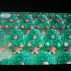 Obstplantage