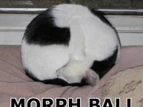 Morphball-Katze